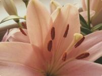 flower dust