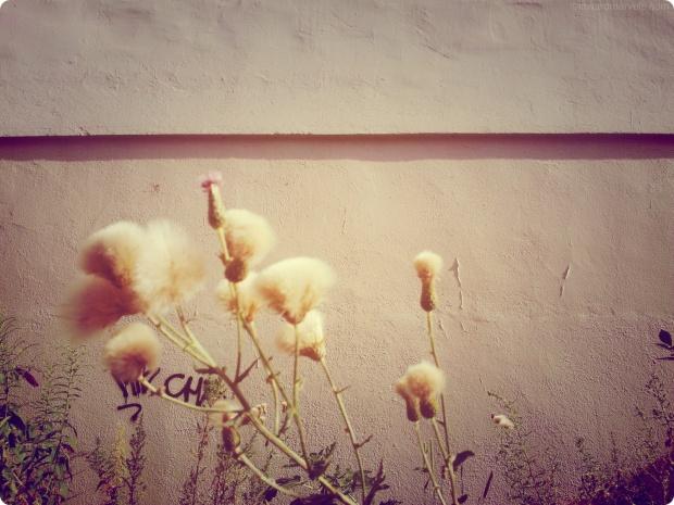 fluffy flowers round