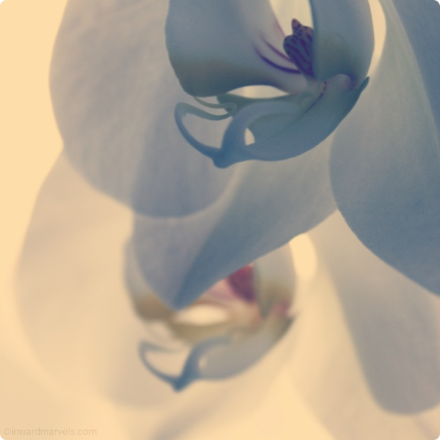 orchid2round