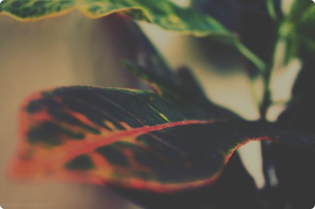 plant rainbow